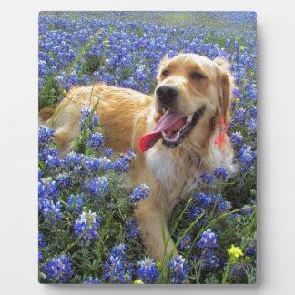Golden Retriever in Blue Bonnets Plaque