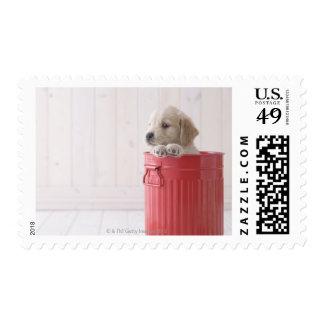 Golden Retriever in Bucket Postage Stamp