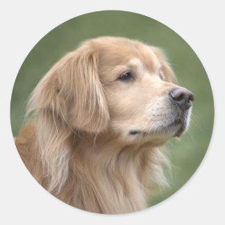 Golden Retriever in Closeup Classic Round Sticker
