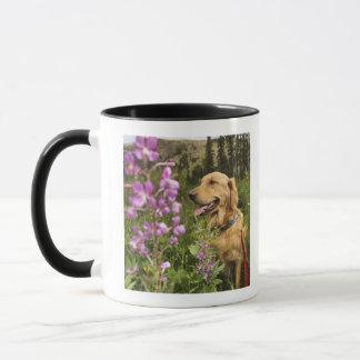 Golden retriever in field mug