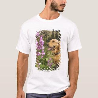 Golden retriever in field T-Shirt