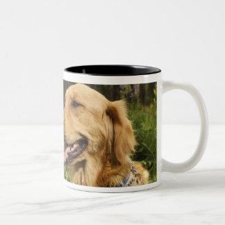 Golden retriever in field Two-Tone coffee mug