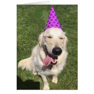 Golden Retriever in Party Hat Happy Birthday Greet