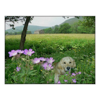 Golden Retriever In The Meadow Poster