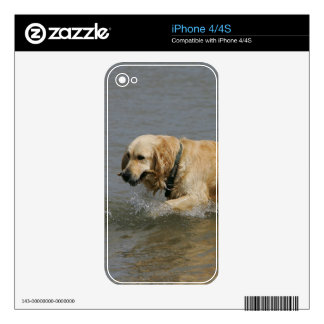 Golden Retriever in Water Skin For The iPhone 4S