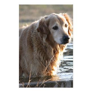 Golden Retriever in Water Stationery