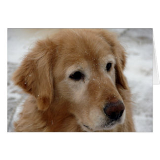 Golden Retriever in Winter Card