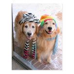 Golden Retriever in Winter Clothes Postcards