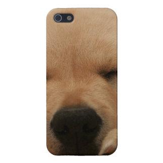 Golden Retriever iPhone 5/5S Cover