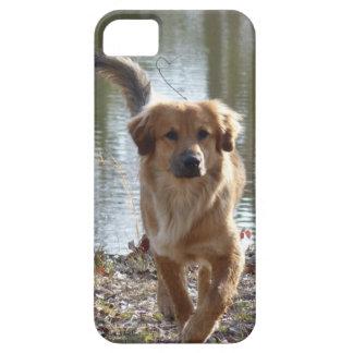 Golden Retriever iPhone SE/5/5s Case