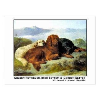 Golden retriever Irish Setter y organismo de Gord Postales