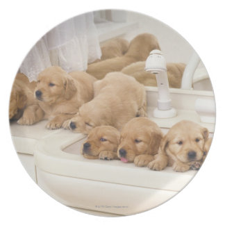 Golden Retriever; is a relatively modern and 2 Dinner Plates