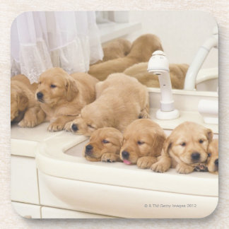 Golden Retriever; is a relatively modern and 2 Drink Coaster