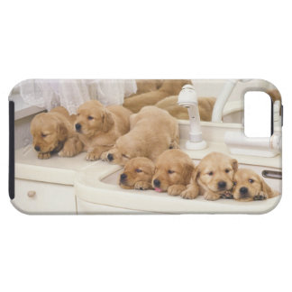 Golden Retriever; is a relatively modern and 2 iPhone SE/5/5s Case