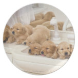 Golden Retriever; is a relatively modern and 2 Melamine Plate