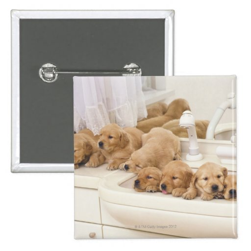 Golden Retriever; is a relatively modern and 2 Pinback Button