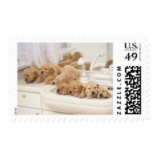 Golden Retriever; is a relatively modern and 2 Postage Stamp