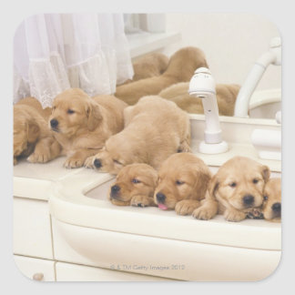 Golden Retriever; is a relatively modern and 2 Square Stickers