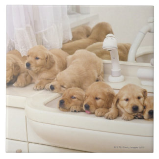 Golden Retriever; is a relatively modern and 2 Large Square Tile