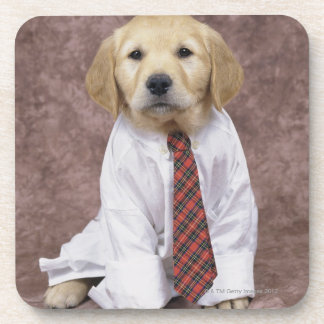 Golden Retriever; is a relatively modern and Coaster