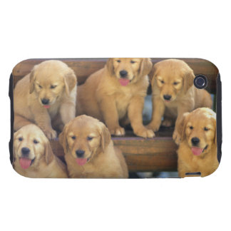 Golden Retriever; is a relatively modern and iPhone 3 Tough Cover