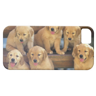 Golden Retriever; is a relatively modern and iPhone SE/5/5s Case