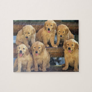 Golden Retriever; is a relatively modern and Jigsaw Puzzle