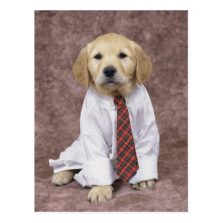 Golden Retriever; is a relatively modern and Postcard