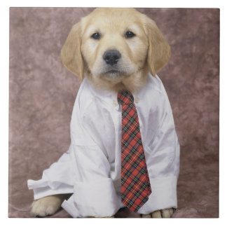 Golden Retriever; is a relatively modern and Large Square Tile