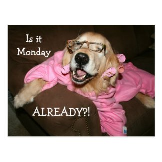 Golden Retriever Is It Monday Already Postcard