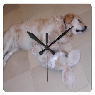 Golden retriever lindo el dormir con el conejo del relojes
