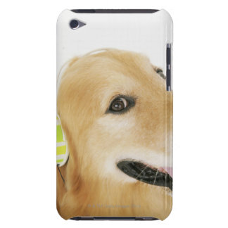 Golden retriever listening to music iPod touch cover