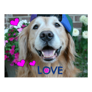 Golden Retriever Love Postcard