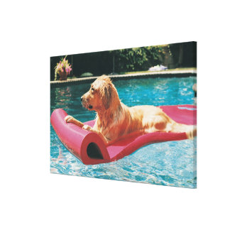 Golden Retriever Lying on an Air Bed in a Canvas Print
