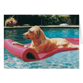 Golden Retriever Lying on an Air Bed in a Card