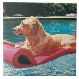 Golden Retriever Lying on an Air Bed in a Ceramic Tile