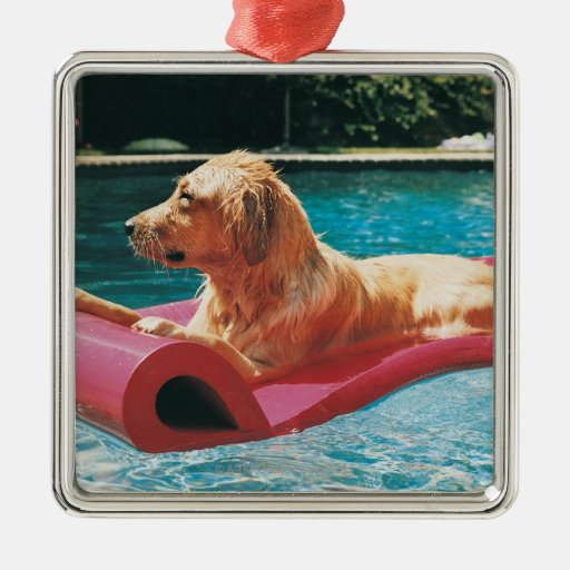 Golden Retriever Lying on an Air Bed in a Ornament