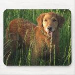 Golden Retriever Maia In The Grass Mousepad