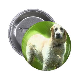 Golden Retriever Marley breed Pins