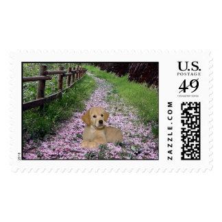 Golden Retriever Meadow Postage
