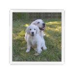 Golden Retriever Mom and Puppy Acrylic Tray