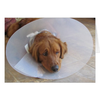 Golden Retriever Note Card with Cone