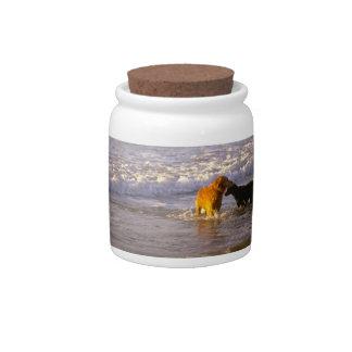 Golden Retriever Ocean Dog Treat Candy Jar