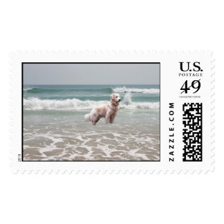 Golden Retriever Ocean View Postage
