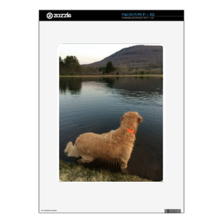 Golden Retriever on a Rock at the Lake iPad Decal