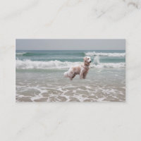 Golden Retriever On Beach Breeder Business Card