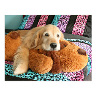 Golden Retriever on Bed Miss You Postcard