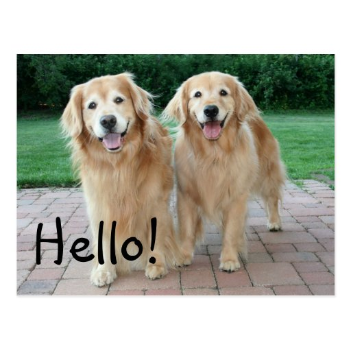 Golden Retriever Outdoor Hello Post Card