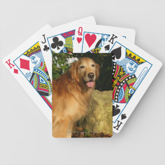 Golden Retriever Panting Bicycle Playing Cards