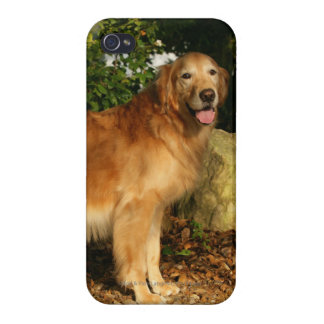 Golden Retriever Panting iPhone 4 Cover